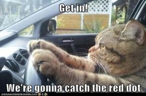cat  get in  we're gonna catch the red dot