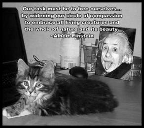 Einstein Cat