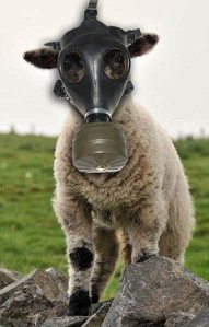 sheeple with mask