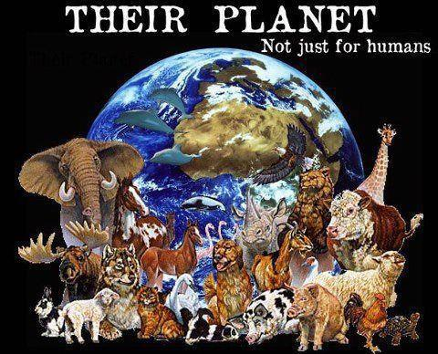 their planet  globe  native causes