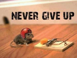 NEVER GIVE UP mouse and cheese  its a trap