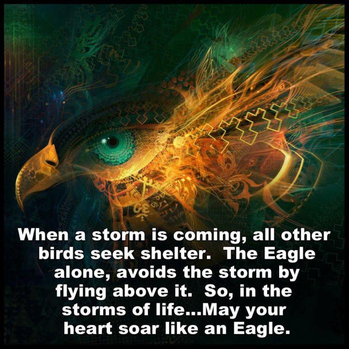 eagle flies above the storm